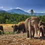 sri-lanka-orphelinat-elephant-illu