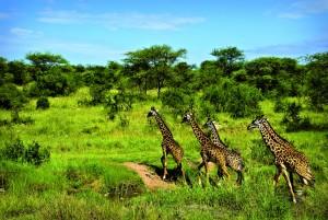 AFRIQUE DU SUD • CIRCUIT «DÉCOUVERTE AUSTRALE»